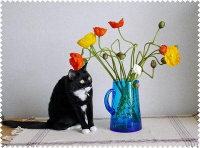 猫とポピーの花