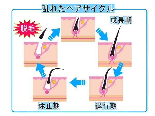 髪のサイクル説明イラスト