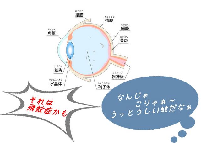 眼球の組織図