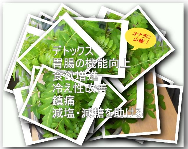 山椒の写真と効能書き