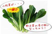 小松菜が一晩で野沢菜の漬け物に!「ためしてガッテン!」レシピ