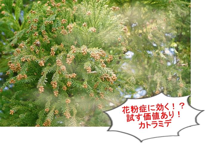 花粉症にカトラミデ