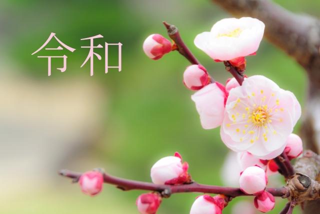 新年号令和のイメージ画像梅の花に令和の文字