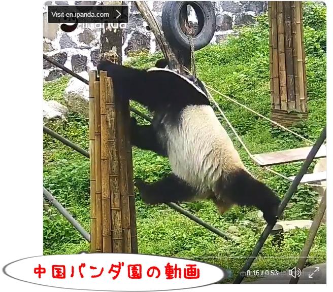 パンダの動画キャプチャ画像