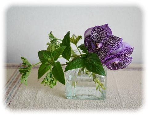 ランの生け花