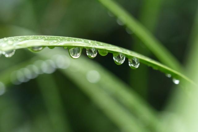 草についた雨粒の写真