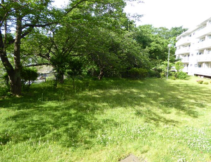 草刈前と後 すてきな雑草たち